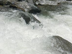 Pairumani Image 5