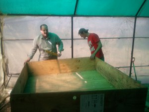 Setting up the aquaponics plant bed in the greenhouse. The plants will be in closed circulation with the fish tank.